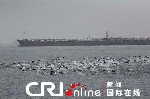Thousands of dolphins blocked the suspected Somali pirate ships when they were trying to attack Chinese merchant ships passing the Gulf of Aden, the China Radio International reported on Monday.(Photo: Cri.cn)